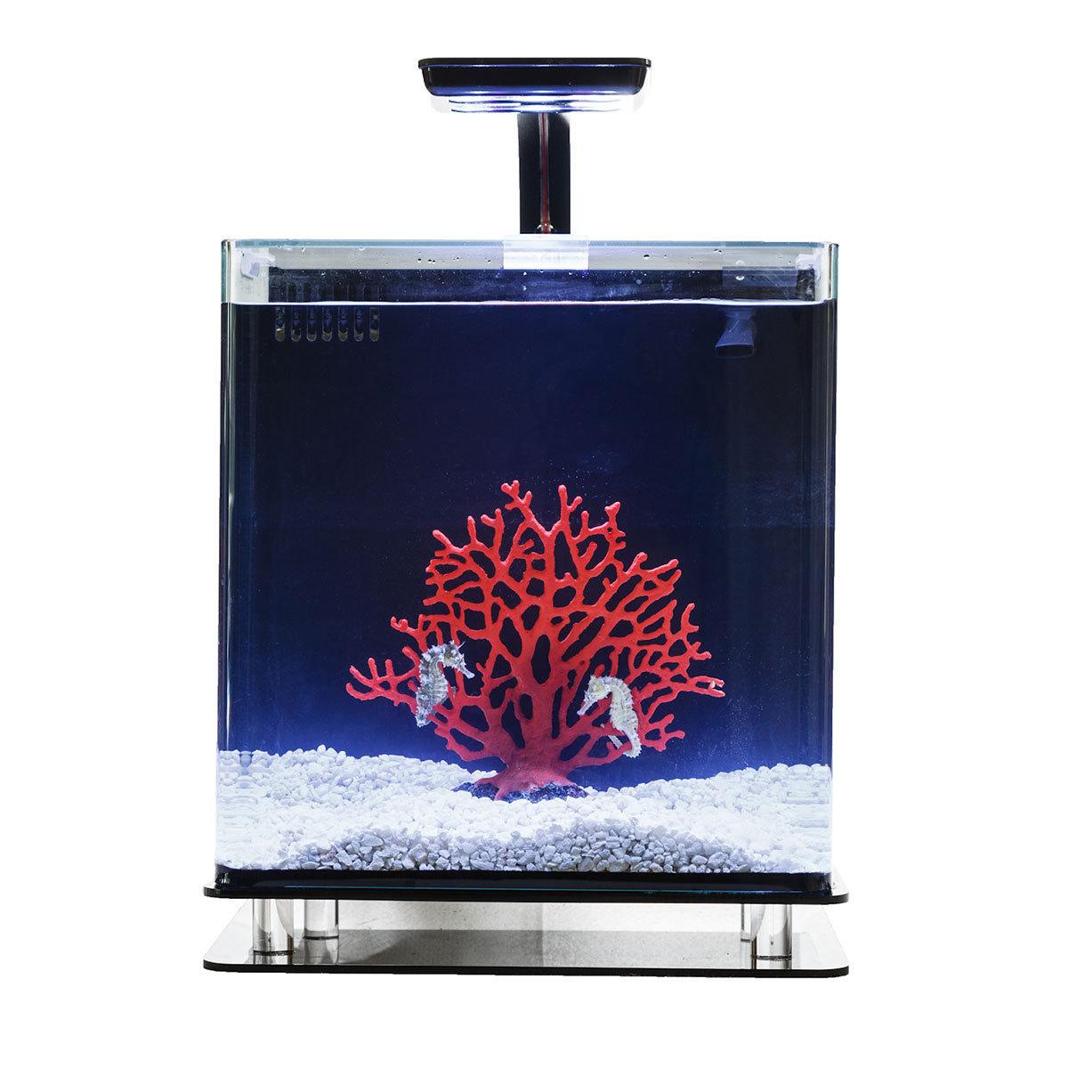 Seahorse Aquarium Kit